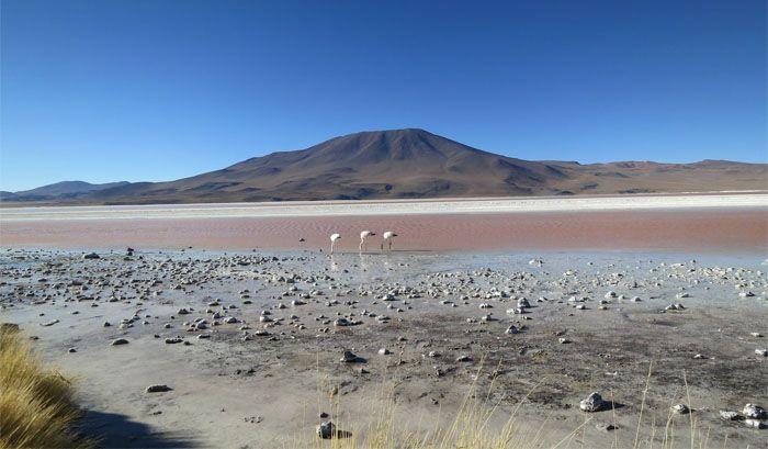 flamingos deserto atacama