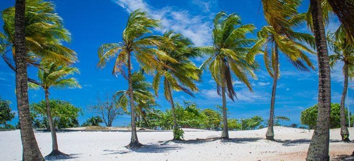 nordeste coqueiros recife