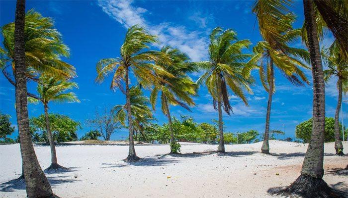 nordeste coqueiros