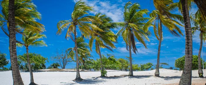 nordeste coqueiros praia